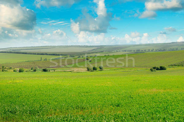 green field and blue sky with light cloud Stock photo © alinamd