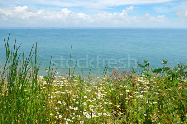 Tenger tengerpart százszorszépek égbolt virág víz Stock fotó © alinamd