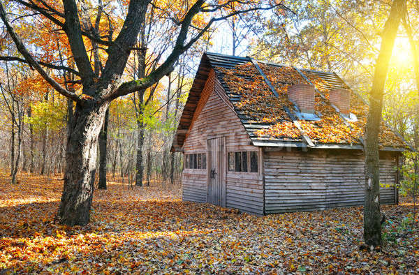 shelter in the beautiful autumn forest Stock photo © alinamd