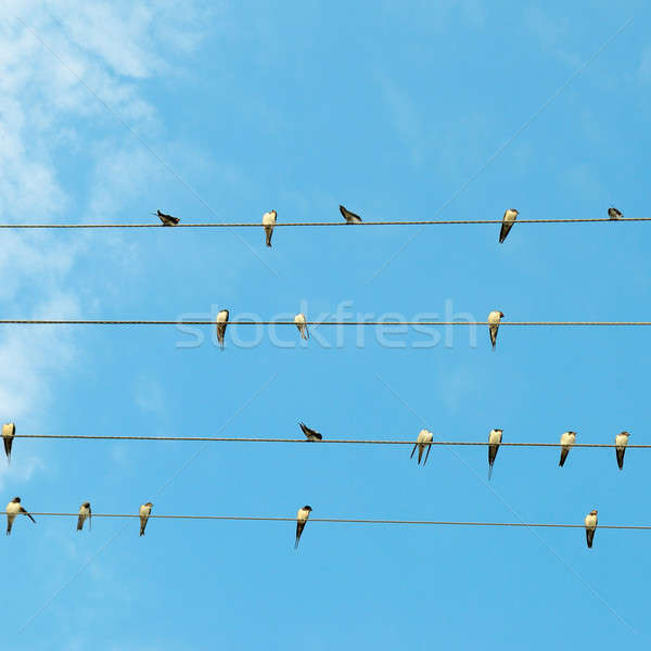flock of swallows on blue sky background Stock photo © alinamd