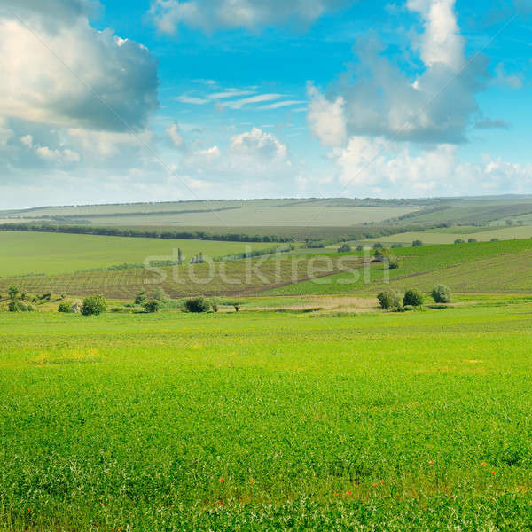 Zöld mező kék ég fény felhők tavasz Stock fotó © alinamd