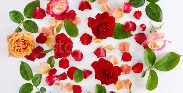 çiçekler kırmızı gül beyaz ahşap üst görmek Stok fotoğraf © alinamd