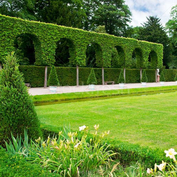 hedge and lawn Stock photo © alinamd