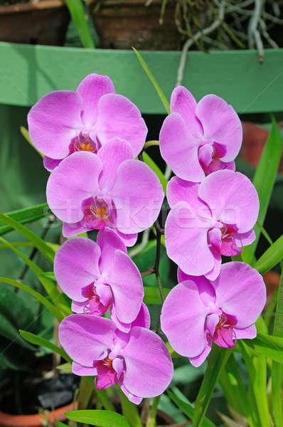 Primo piano bella orchidee verde fiori abstract Foto d'archivio © alinamd