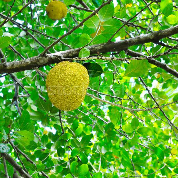 Feuilles vertes arbre forêt été vert fruits Photo stock © alinamd