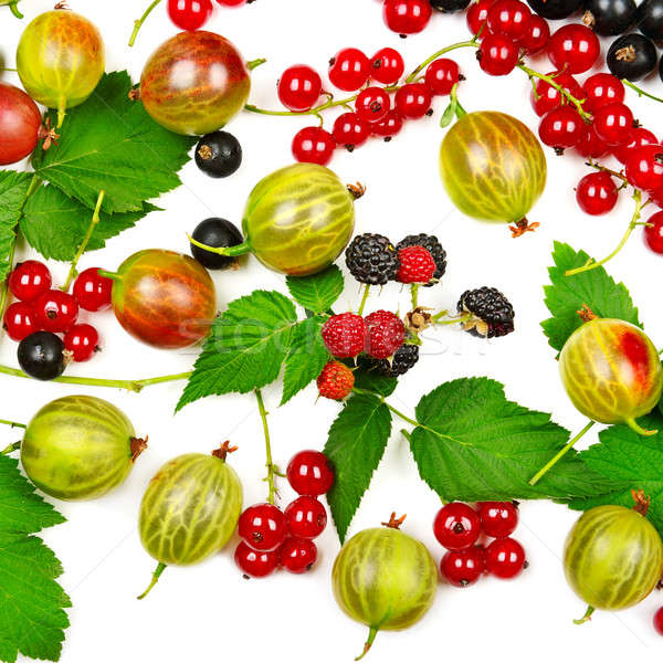 berries black and red currants, gooseberries and blackberries is Stock photo © alinamd