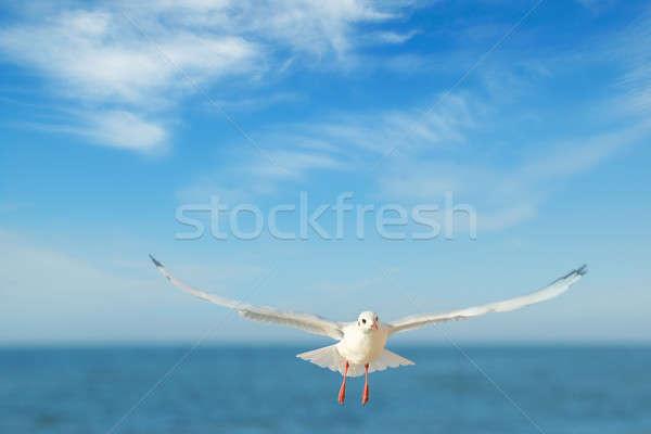 鴎 飛行 青空 空 水 美 ストックフォト © alinamd