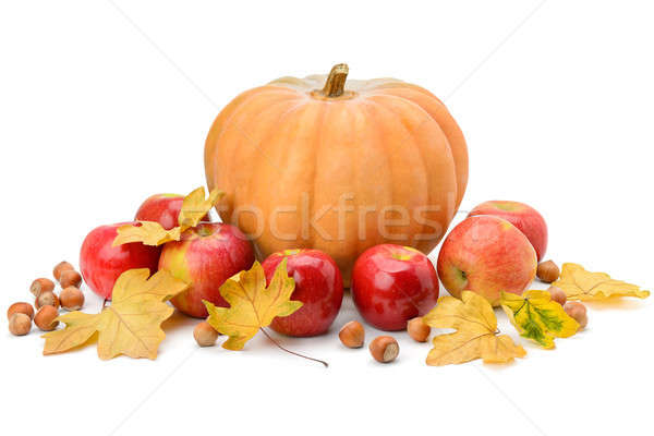 Pumpkin, apples and hazel isolated on white Stock photo © alinamd