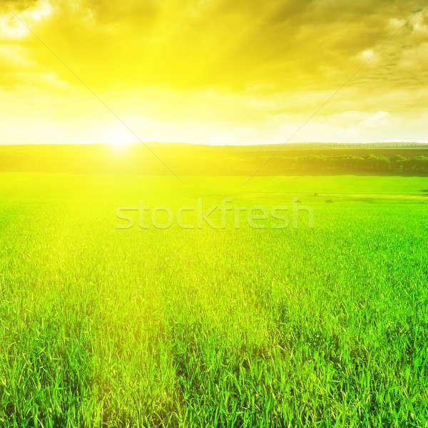 美しい 日の出 麦畑 空 草 木材 ストックフォト © alinamd