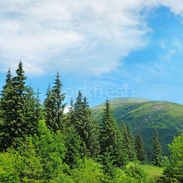 scenic mountain peaks  Stock photo © alinamd