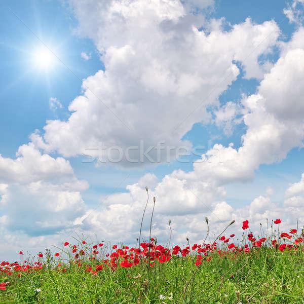Stockfoto: Veld · klaprozen · zon · blauwe · hemel · hemel · bloem