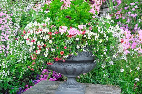 красивой Клумба ваза весны закрывается пейзаж Сток-фото © alinamd