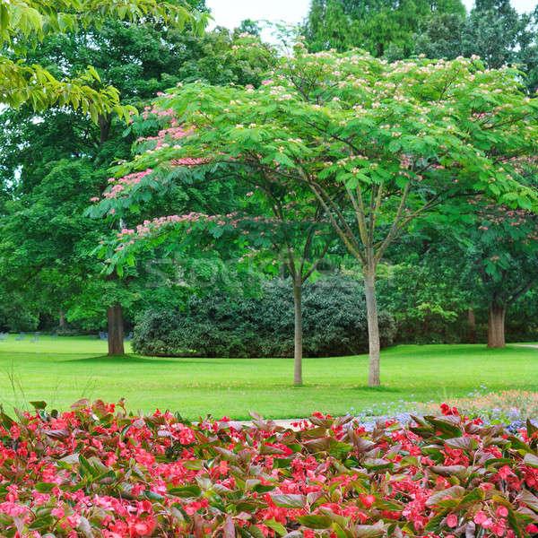 summer park, lawn and flower garden Stock photo © alinamd