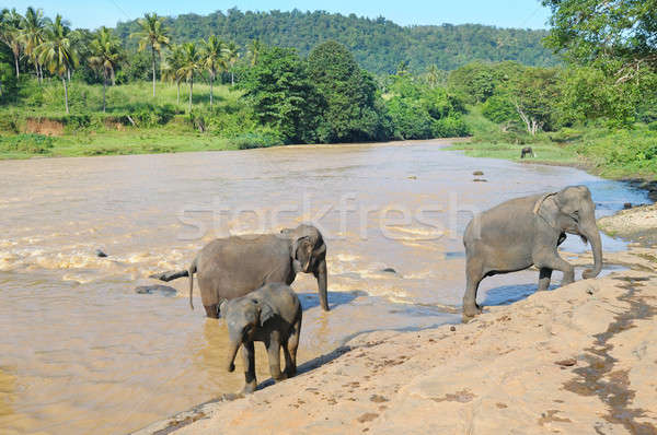 Elefantes rio céu água natureza Foto stock © alinamd
