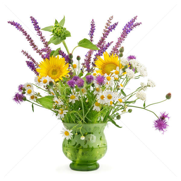 Flores silvestres vaso isolado branco grama vidro Foto stock © alinamd