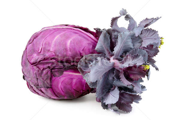 head of cabbage isolated on a white background Stock photo © alinamd