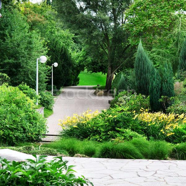 beautiful park  Stock photo © alinamd