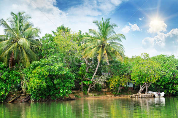 river and tropical plants on the coast Stock photo © alinamd
