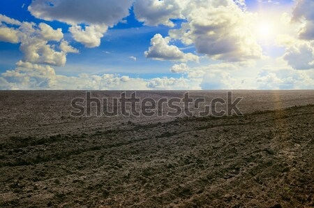 plowed field and sun on cloudy sky Stock photo © alinamd