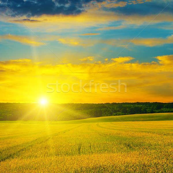 Stockfoto: Verrukkelijk · zon · zonsopgang · boom · voorjaar