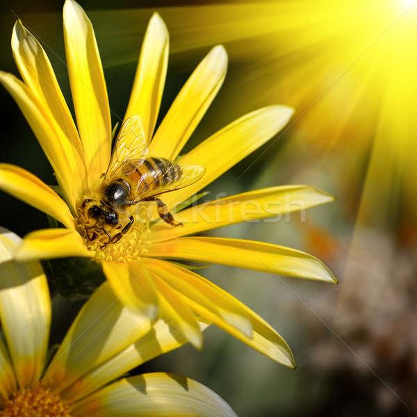 bee on a beautiful flower in the sun Stock photo © alinamd