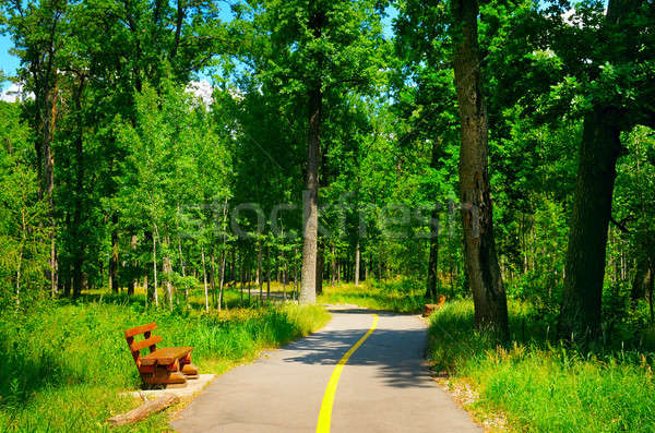 summer park with beautiful walking paths Stock photo © alinamd