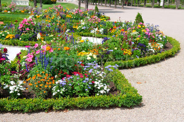 delightful flower bed in the summer park Stock photo © alinamd