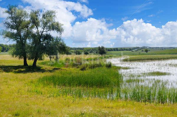 Velho lago aquático vegetação céu pitoresco Foto stock © alinamd