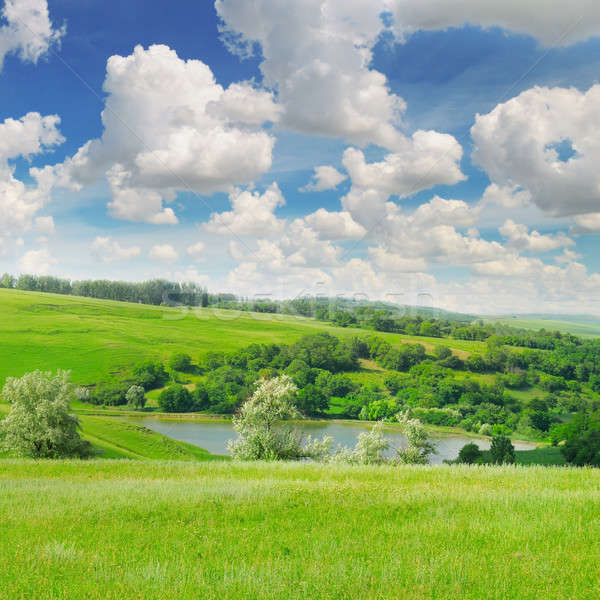 Pitoresco verde campo blue sky primavera floresta Foto stock © alinamd