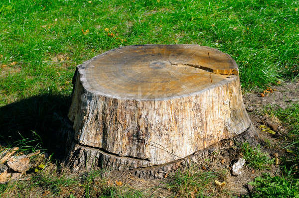 old tree stump in the summer park Stock photo © alinamd