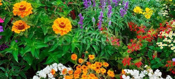 bright garden flowers Stock photo © alinamd