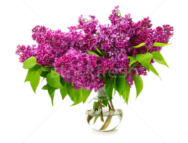 bouquet of lilac in a glass vase isolated on white background Stock photo © alinamd