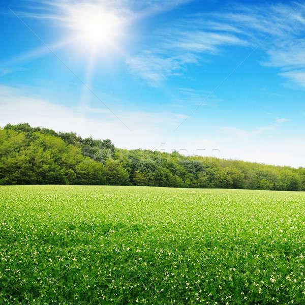 Amanecer verde campo cielo hierba puesta de sol Foto stock © alinamd