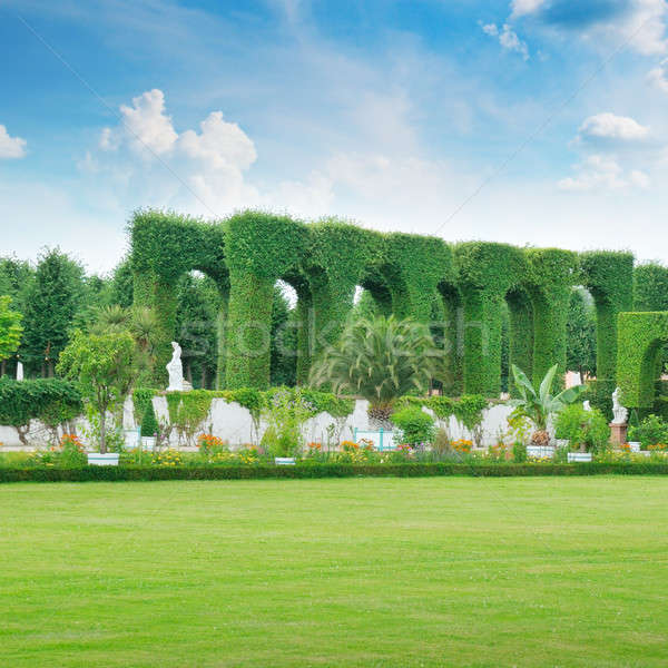 lawn and hedge in a summer park Stock photo © alinamd
