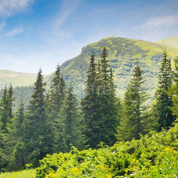 Ataviar forestales ladera hierba madera paisaje Foto stock © alinamd