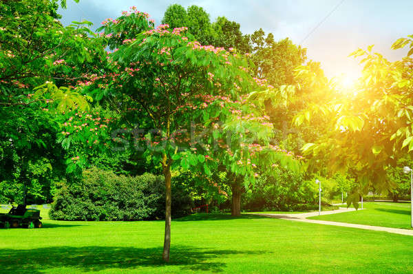 summer park with beautiful green lawns Stock photo © alinamd