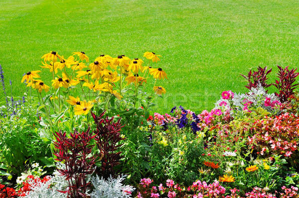 summer flower bed and green lawn Stock photo © alinamd