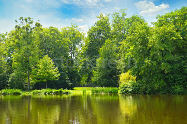 picturesque lake, summer forest on the banks and sky Stock photo © alinamd