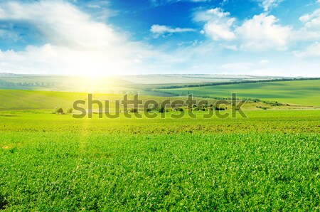 green field and blue sky Stock photo © alinamd