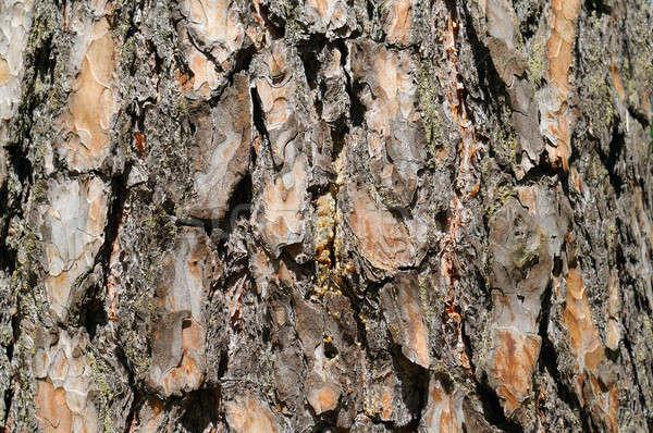 Drogen boom schors textuur achtergronden abstract Stockfoto © alinamd