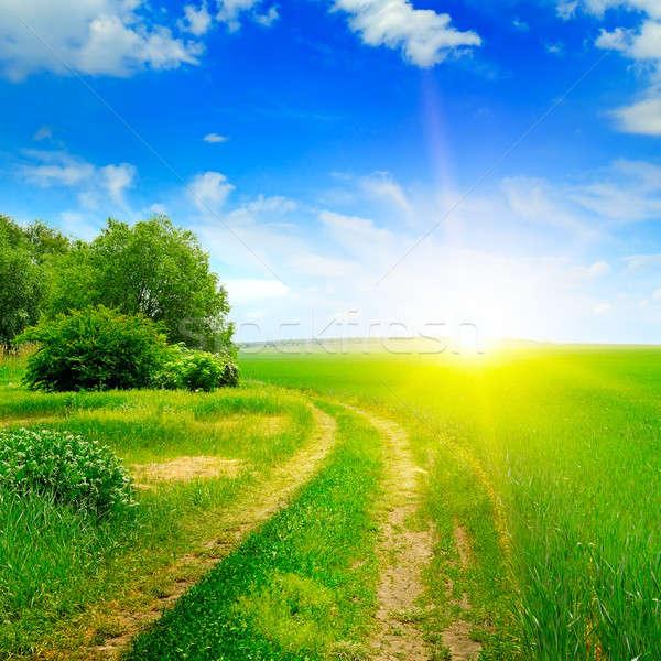 Verde campo sol blue sky nuvens madeira Foto stock © alinamd