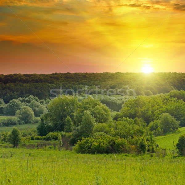 Green fields and a bright sunrise Stock photo © alinamd