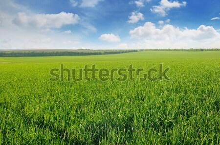 Groene veld blauwe hemel wolken zon landschap Stockfoto © alinamd