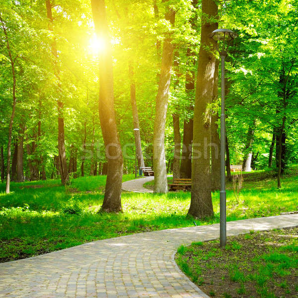 summer park with walking paths Stock photo © alinamd