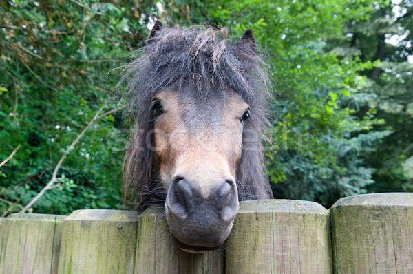 funny pony Stock photo © alinamd