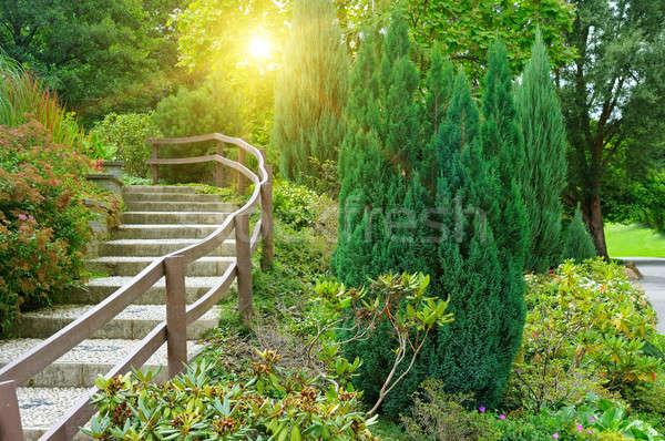beautiful summer park and sunrise Stock photo © alinamd
