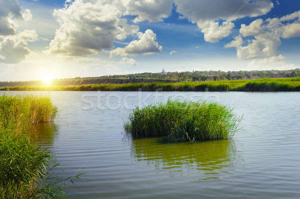 thickets of reeds on the lake Stock photo © alinamd