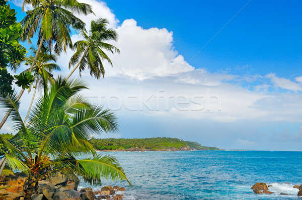 ocean and tropical palm trees on the shore Stock photo © alinamd