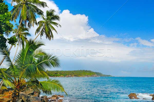 океана тропические пальмами берега пляж воды Сток-фото © alinamd