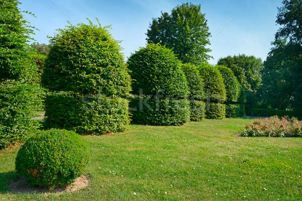 Hedges and ornamental shrub in a summer park. Stock photo © alinamd